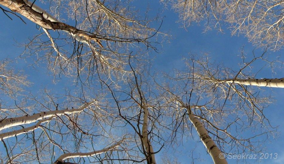 Aspen in the sky