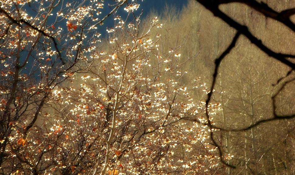 Maple seeds at sunrise