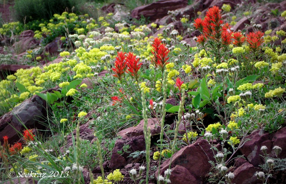 Wasatch Mountain Wildflowers on Great Western Trail