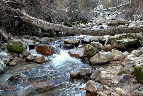Fallen tree over Little Cottonwood Canyon Stream