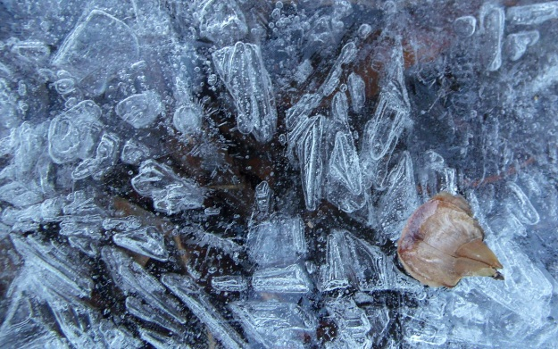 Ice crystals on frozen pond