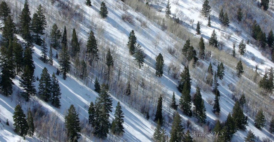 trees on snowy hillside
