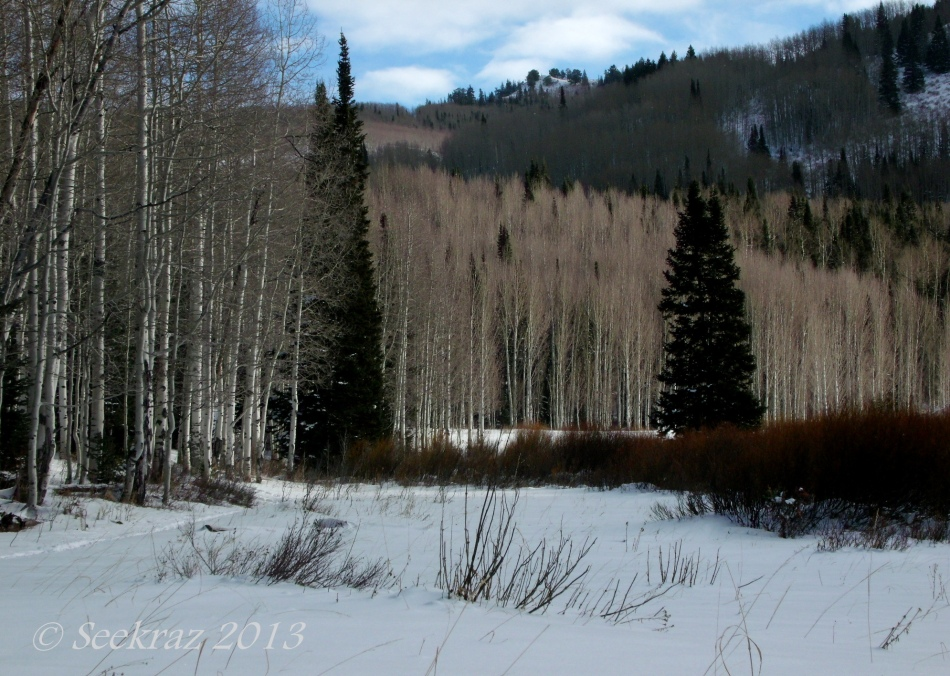 Happy Christmas, Aspen and Pine on Lake Desolation Trail