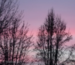 sunset trees 1