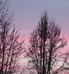 sunset trees 2