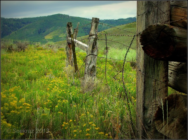 Scofield horse barn fence posts.