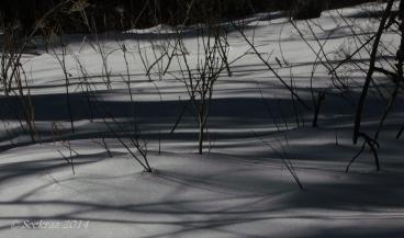 snowy shadows 2