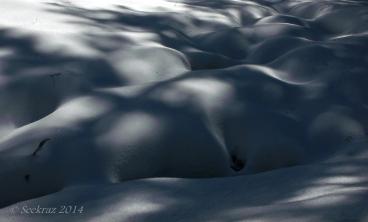 snowy shadows 5
