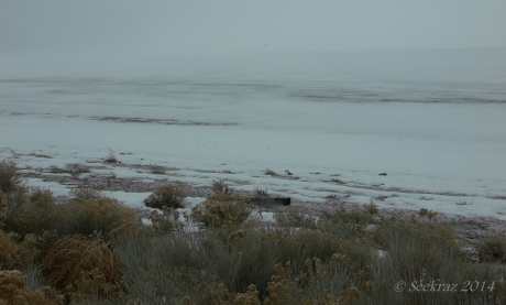Antelope Island study in white 17