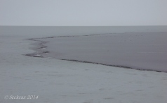Antelope Island study in white 19