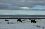 Antelope Island study in white22