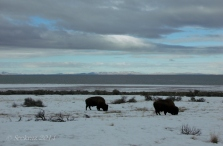 Antelope Island study in white 22