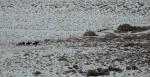 Antelope Island study in white27