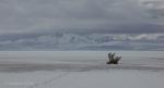 Antelope Island study in white35
