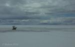 Antelope Island study in white36