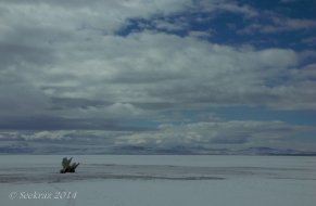Antelope Island study in white 37