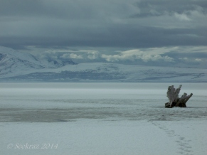 Antelope Island study in white 38