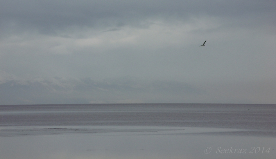 Gull over The Great Salt Lake