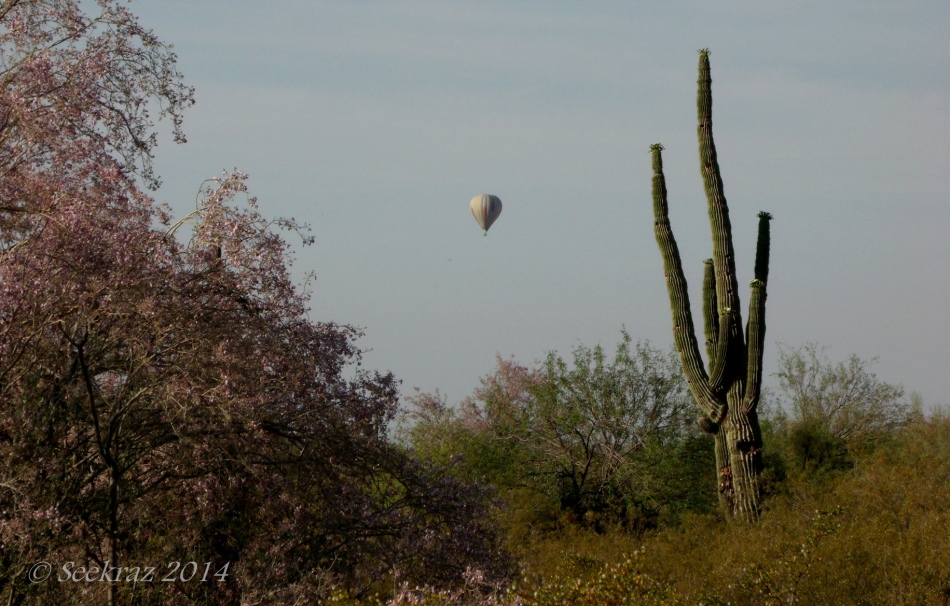 Saguaro and Hot Air Balloon over North Phoenix