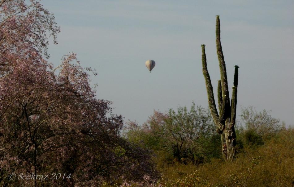 Saguaro and Hot Air Balloon over North Phoenix