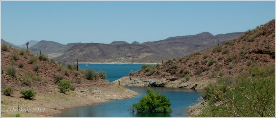 Lake Pleasant Sailboat and Saguaros