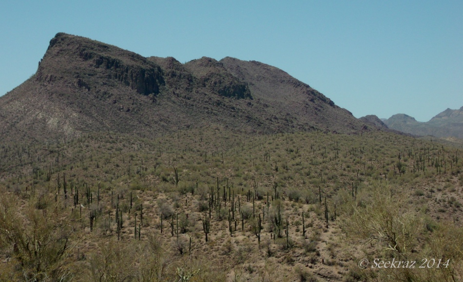 mountain and Saguaro cacti afield