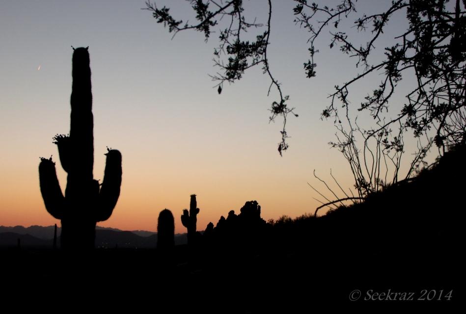 saguaro sunset silhouette