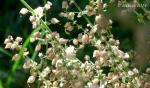 Seven Springs Wildflowers