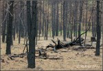 Forest after the FisherFire