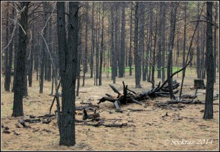 Forest after the Fisher Fire