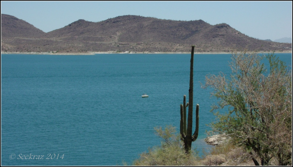 Saguaro Cactus at Lake Pleasant