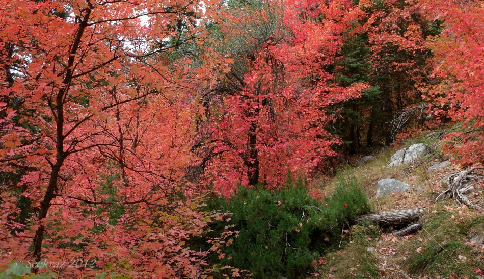 Fall memories in Little Cottonwood Canyon, Utah, 2012