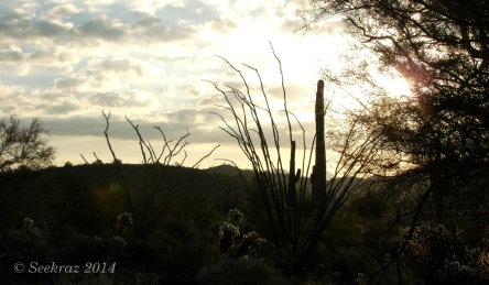 Cacti at sunrise