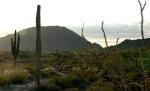 Desert morning trail