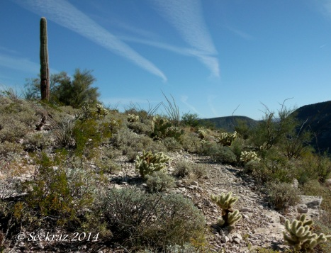 Diverse vegetation atop Indian Mesa