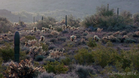 Glowing cacti at sunrise
