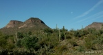 saguaro cacti in sonora desert withmoonset
