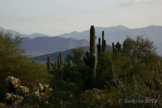 Saguaro cacti with mountain background