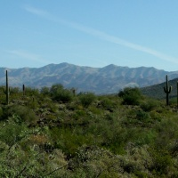 The Saguaro Cactus - a study of variation within a theme....