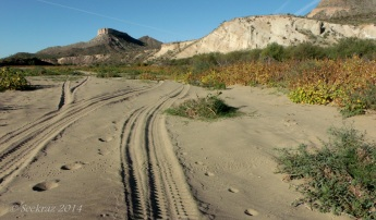 Sandy trail in flood plain on west side of Agua Fria River toward Indian Mesa