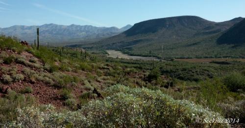 Sentinel Saguaro with Agua Fria River desertscape