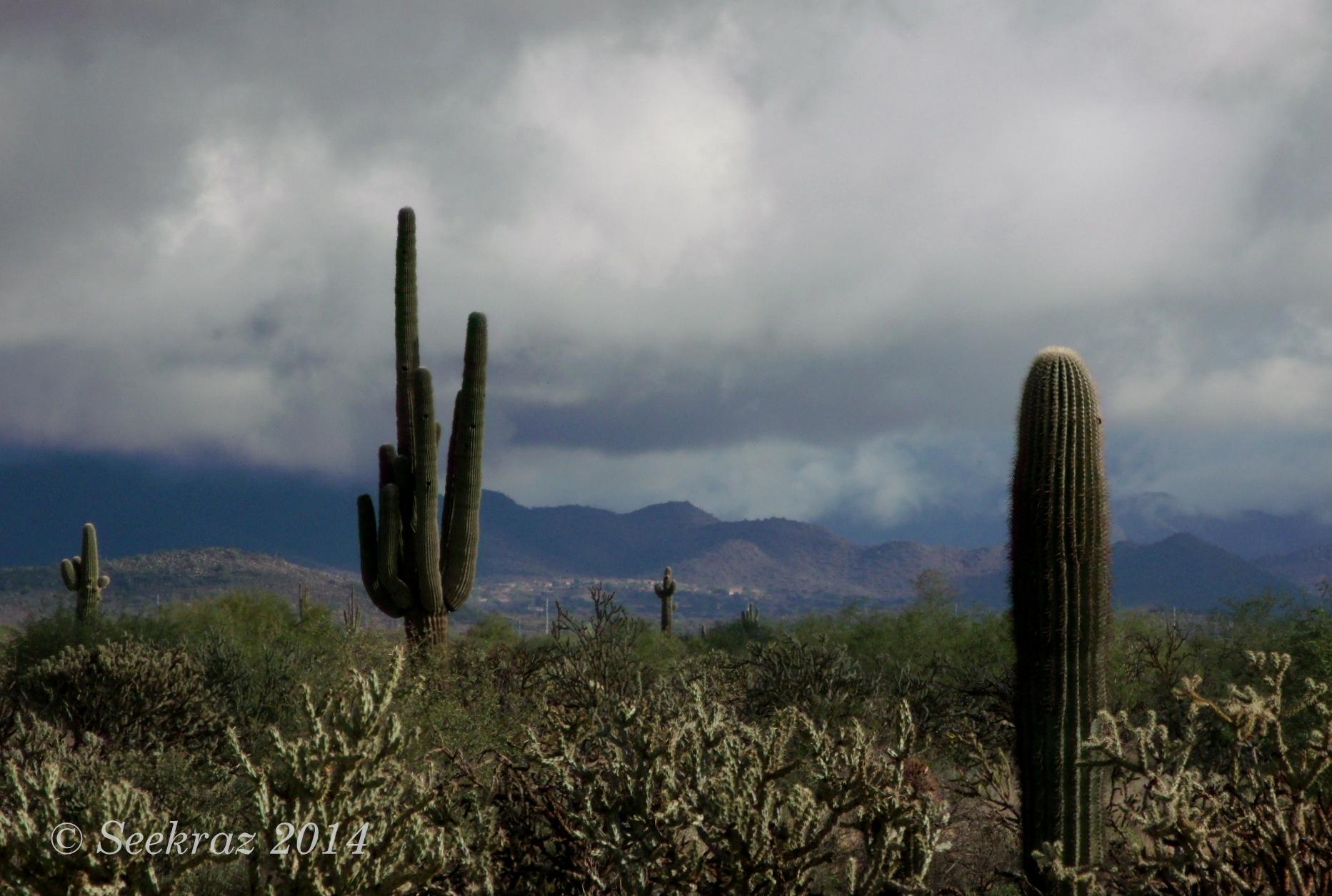 romantic places cactus clouds - photo #6