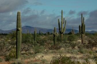 Clouds over green desert