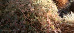 dew on ground-cover and cactusspines