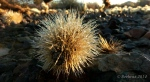 dewy cactus baby