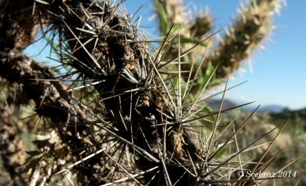 gray spines on black cactus branch