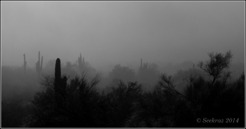 Saguaro cacti in the clouds, in black and white