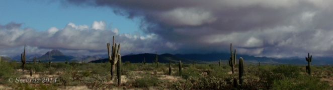 Saguaro cacti and storm clouds