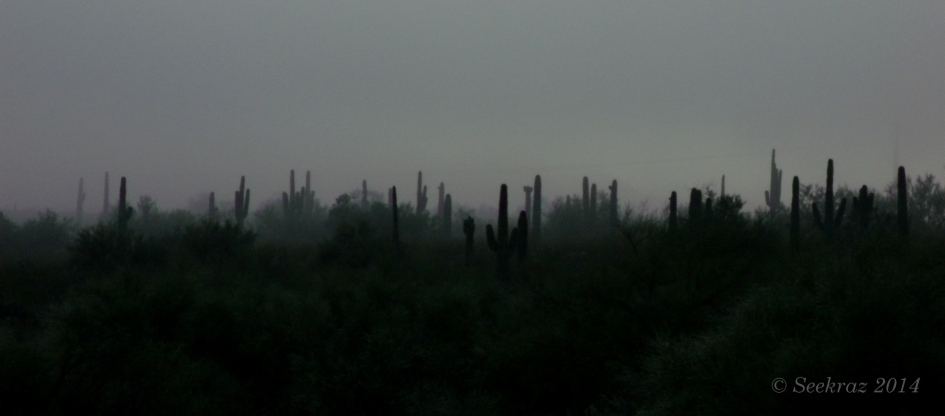 Saguaros in the clouds