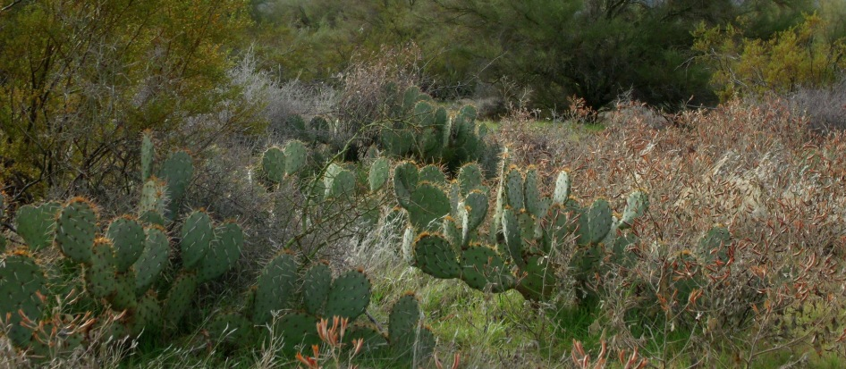 cactus and shrubs and trees